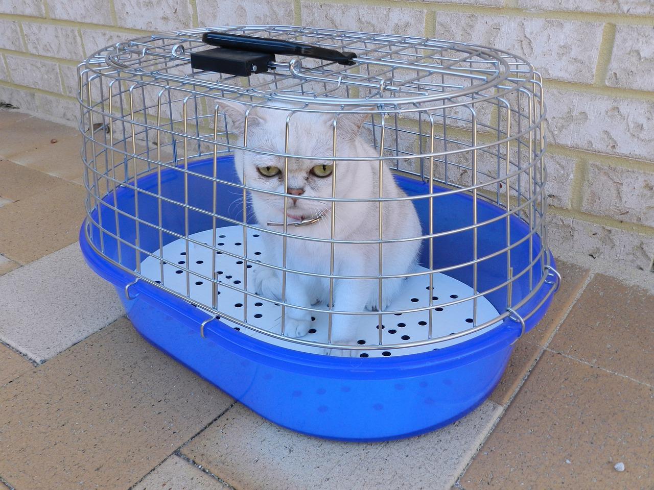 Harga Kandang Kucing