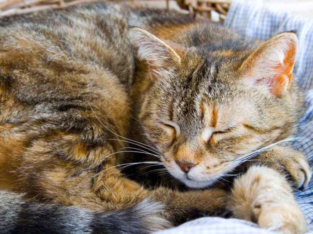Cara Mengobati Kucing Flu Secara Alami