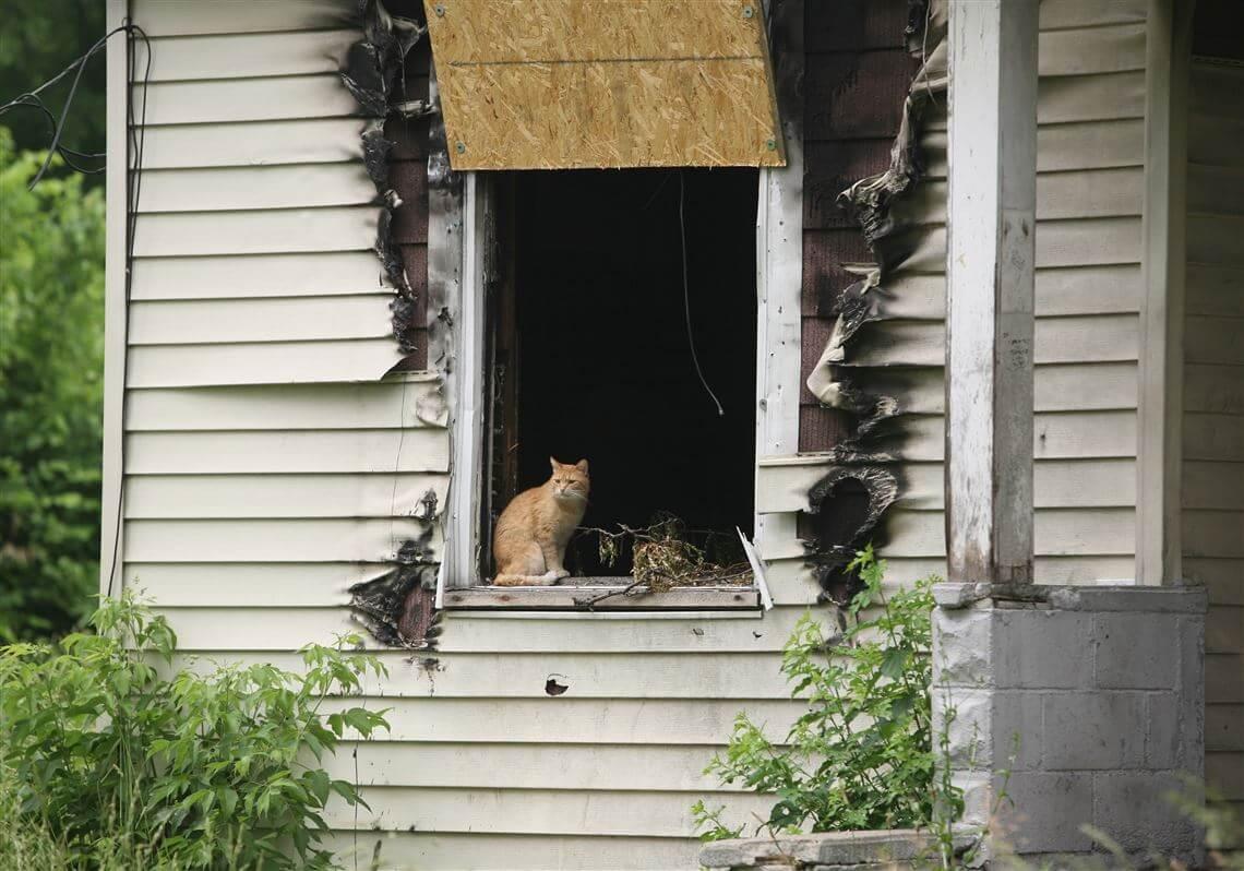 Cara Mengusir Kucing yang Tepat