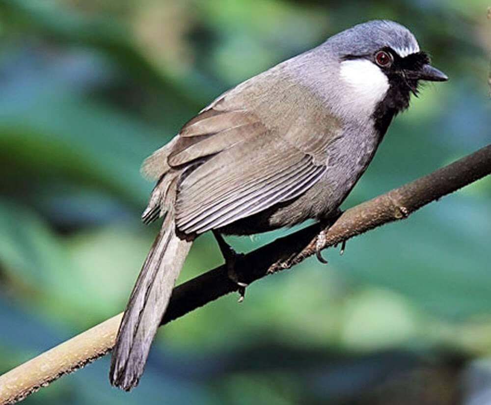 Faktor yang Berpengaruh Terhadap Harga Burung Poksay