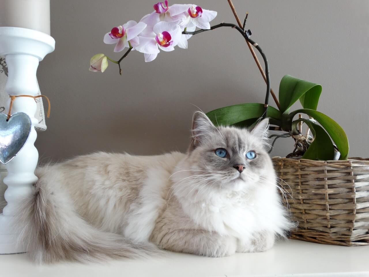 Hal-hal yang Mempengaruhi Harga Kucing Anggora
