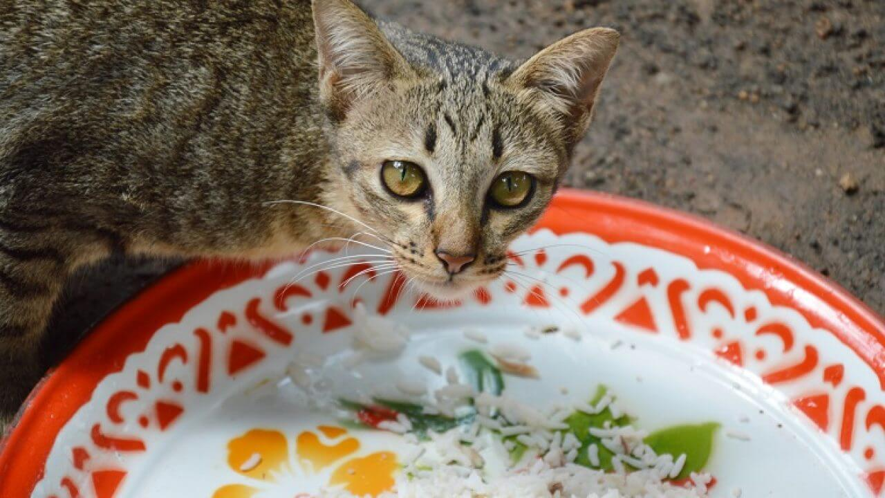 7 Makanan Untuk Kucing Kampung Dan Minumannya Yang Perlu Diketahui