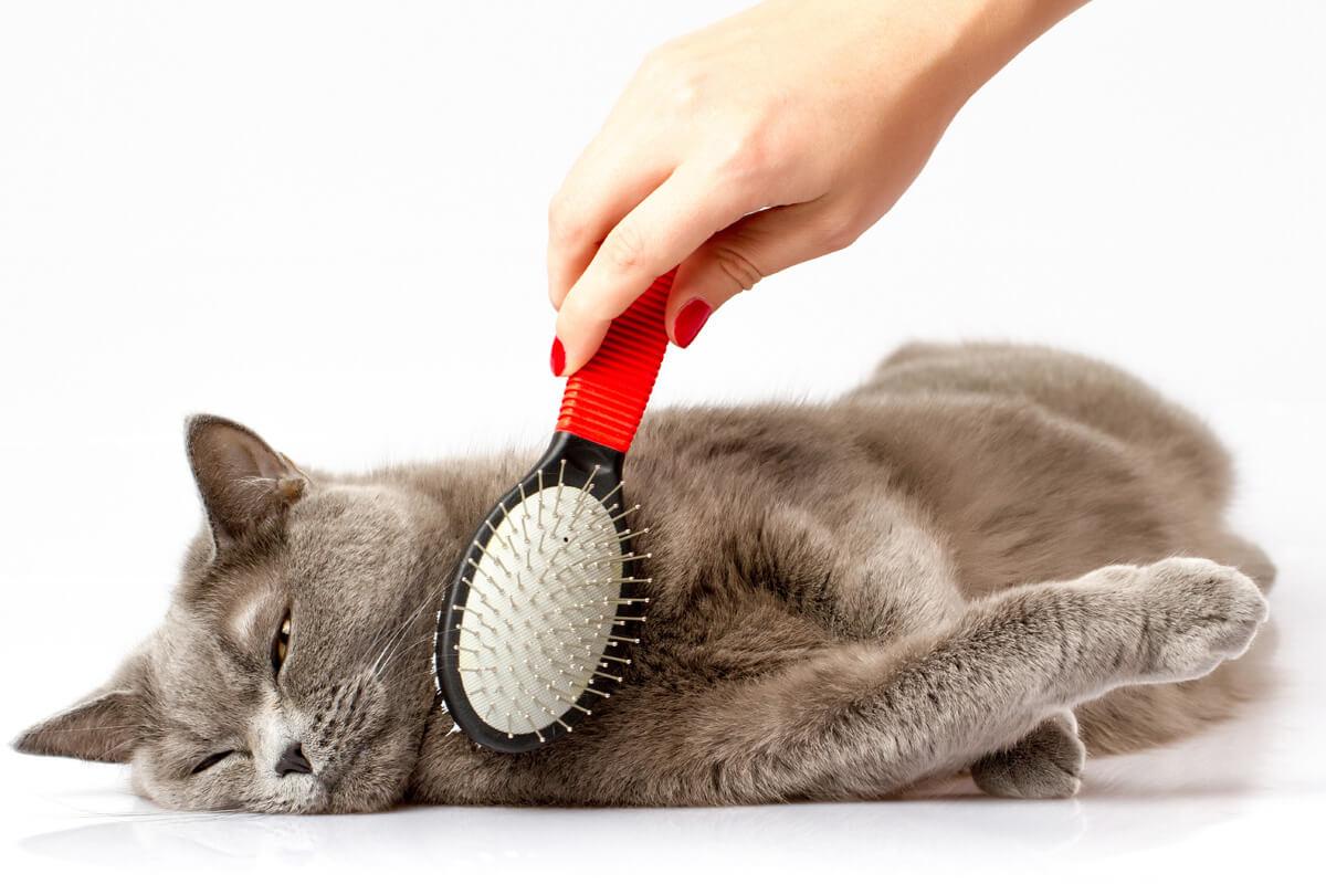 Manfaat Grooming Kucing