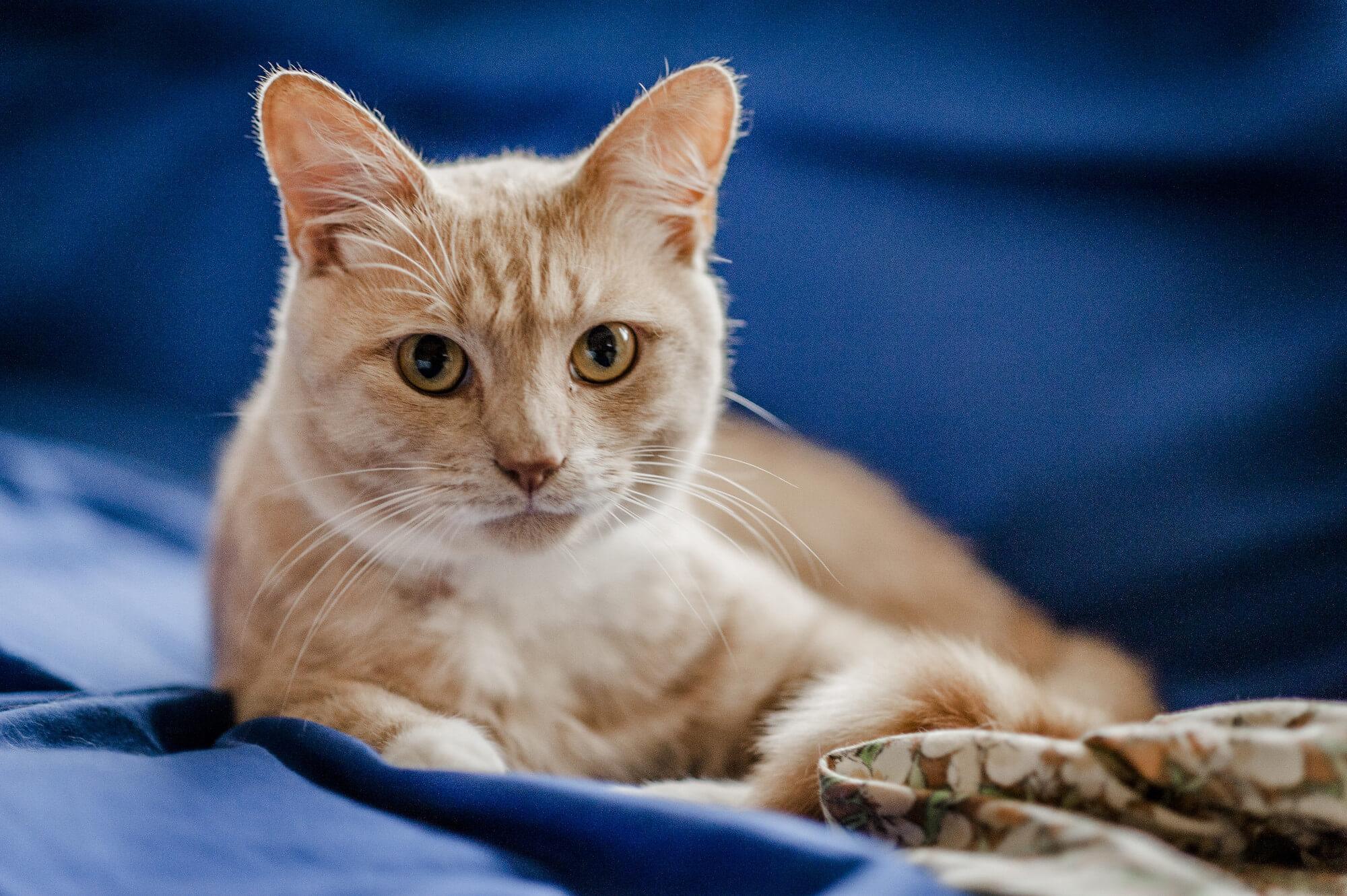 Penyebab Flu Pada Kucing