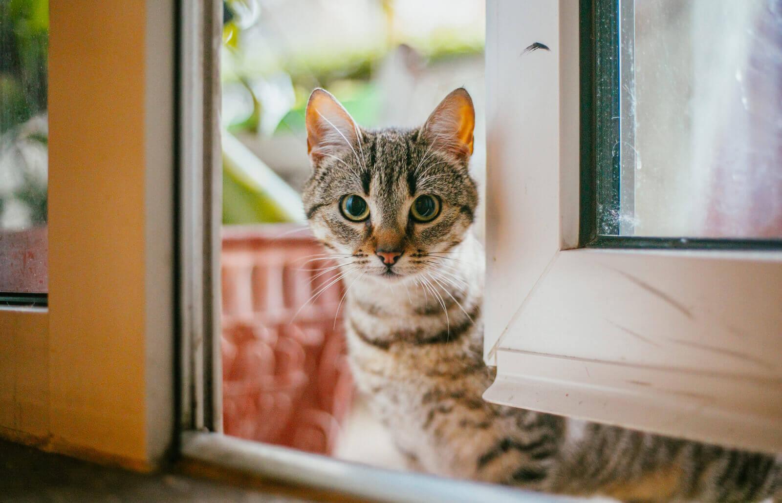Penyebab Mengapa Kucing Kampung Sering Dihindari