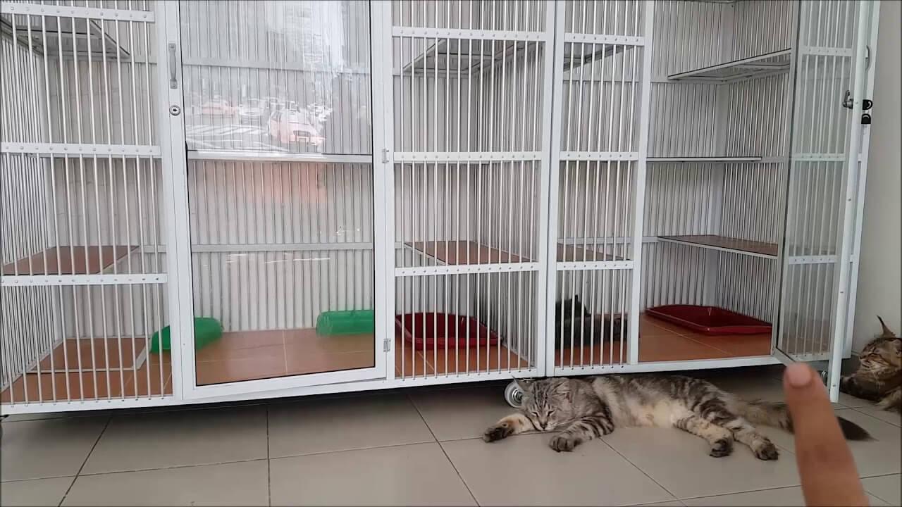 Tips Memilih Kandang Kucing