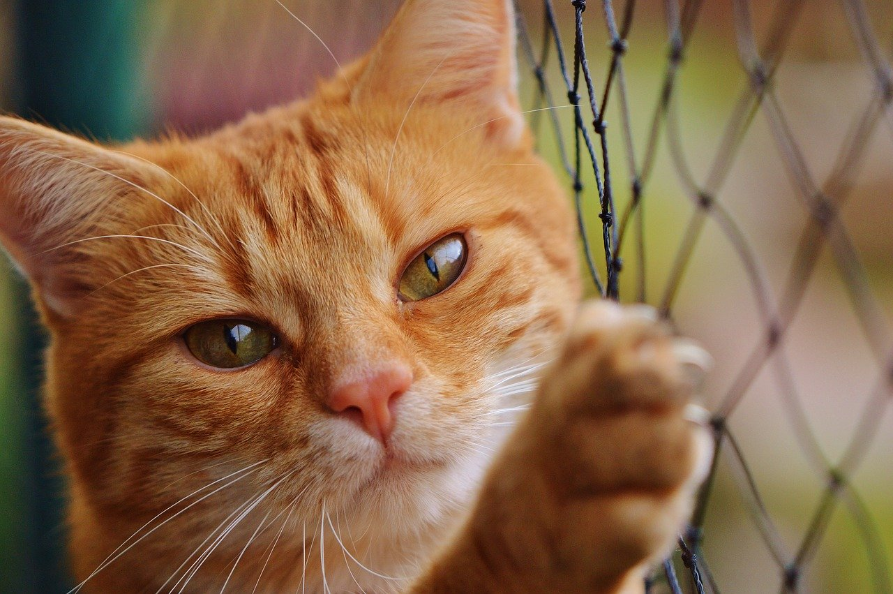 cara mengobati kucing belekan