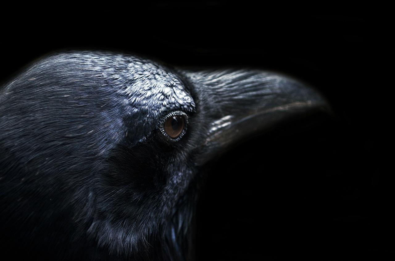 cara mengobati katarak pada burung