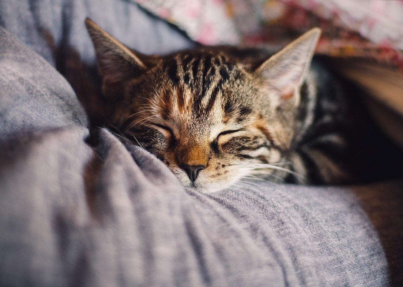 cara mengobati kucing sakit tanpa ke dokter