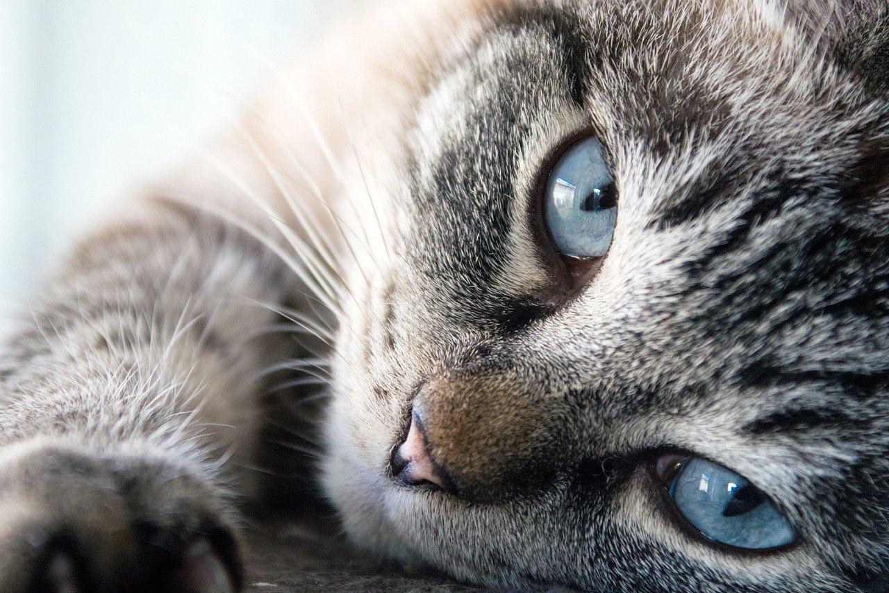 ciri-ciri kucing berhasil kawin
