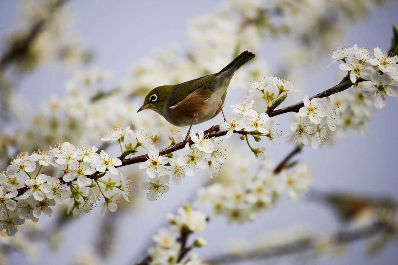 efek samping obat metabolis untuk burung