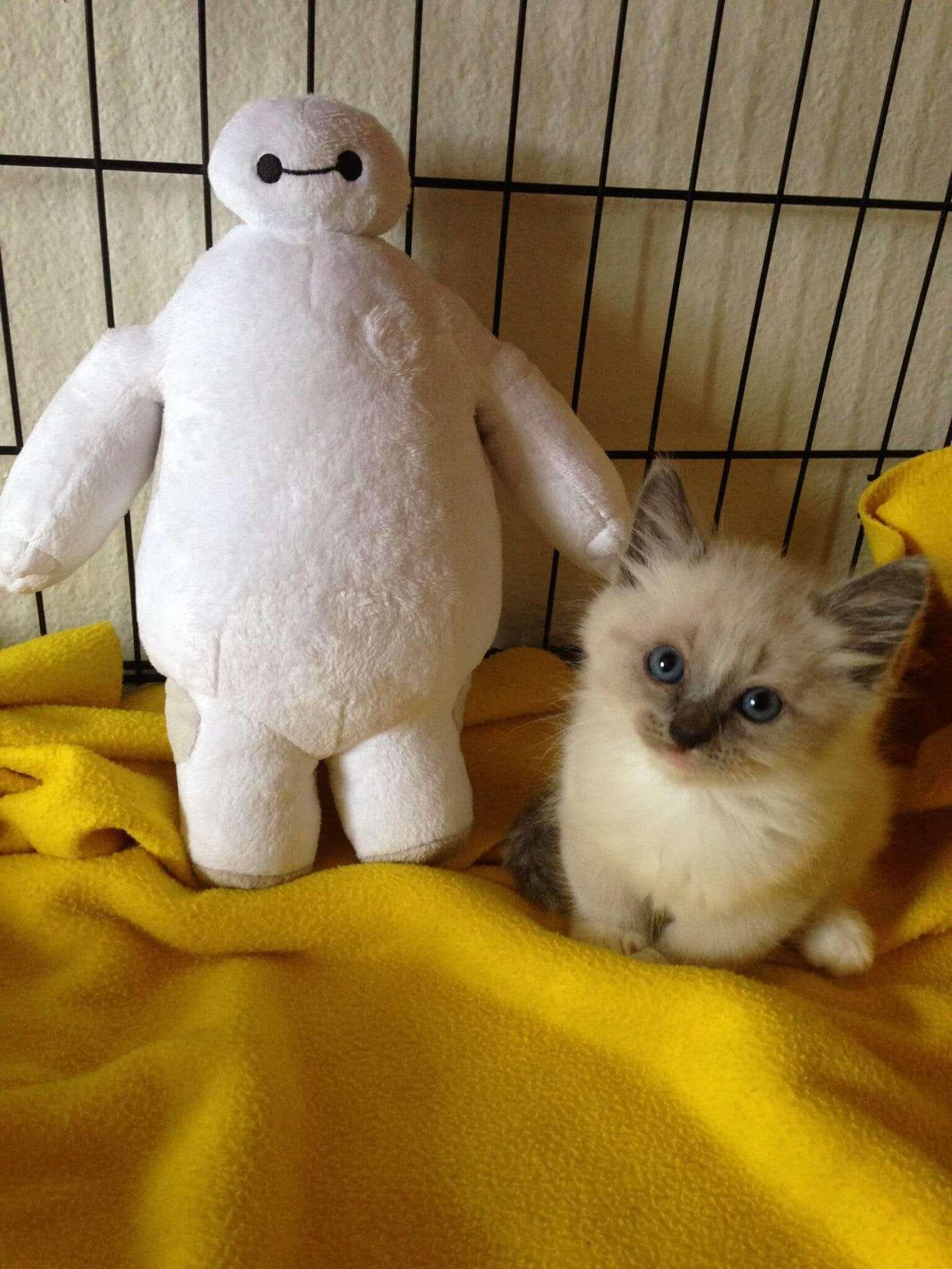 Cara Merawat Bayi Kucing Prematur: Pastikan Kandang Tetap Dalam Suhu Yang Hangat