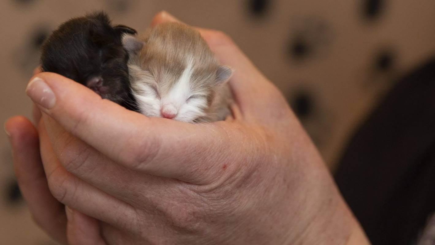 Cara Merawat Bayi Kucing Ditinggal Mati Ibunya: Berikan Kasih Sayang Dan Perhatian Pada Bayi Kucing