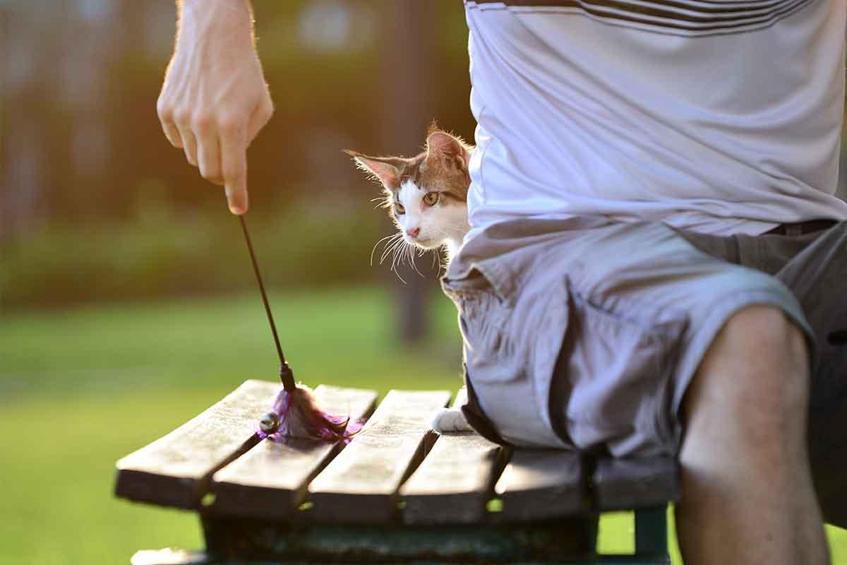 cara menggemukan kucing maine coon: Ajak Selalu Si Kucing Bermain