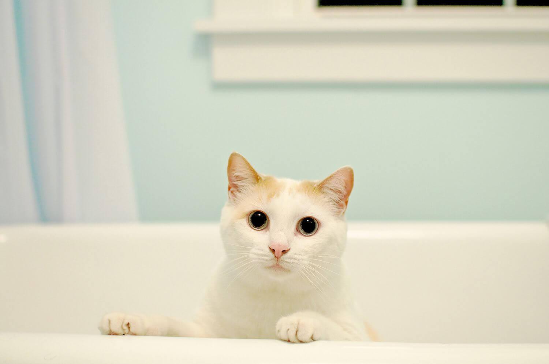 Cara Merawat Kucing Kampung: Mandikan Kucing Seminggu Sekali Secara Rutin