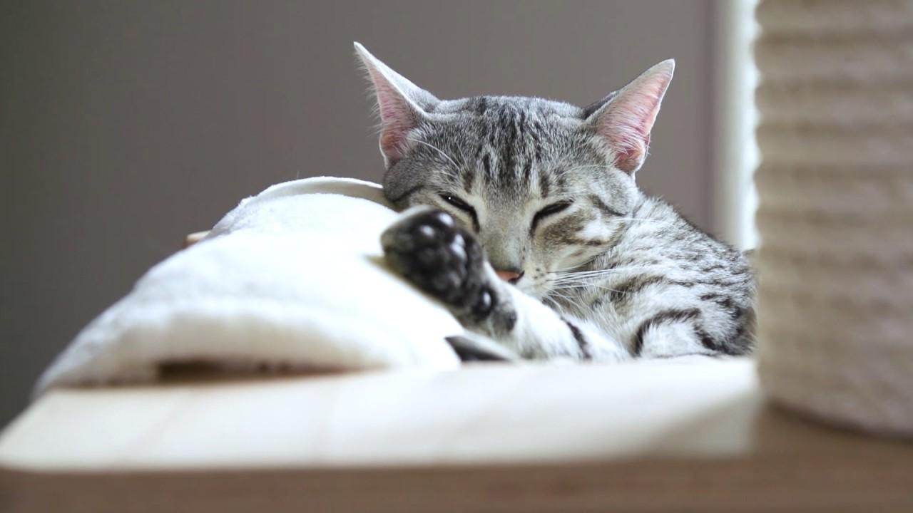 cara menggemukan kucing anakan: Membuat Kucing Selalu Betah di Tempat Tinggalnya