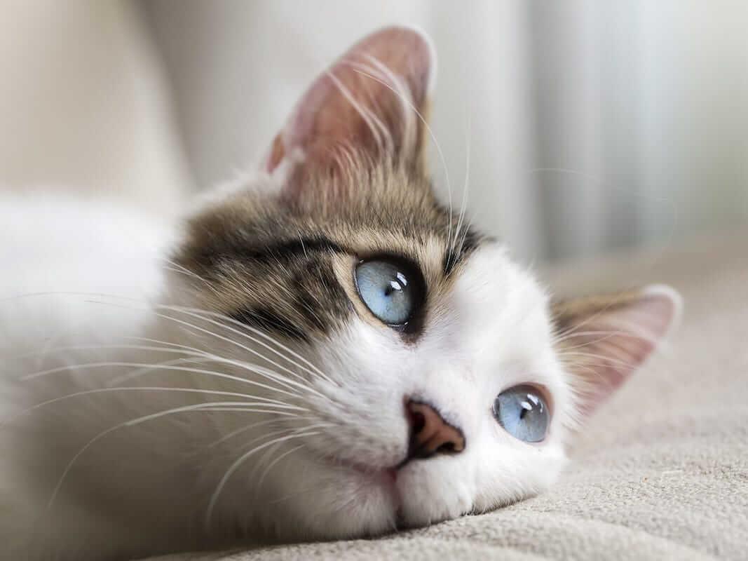 Pastikan Lingkungannya Nyaman Untuk Kucing Belekan