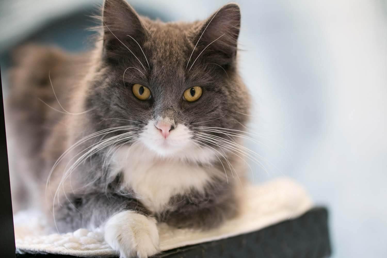 Penyebab Kucing Tidak Mau Makan Makanan Kering