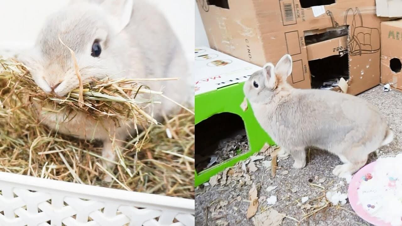 Minggu Ke Empat Kehamilan Kelinci