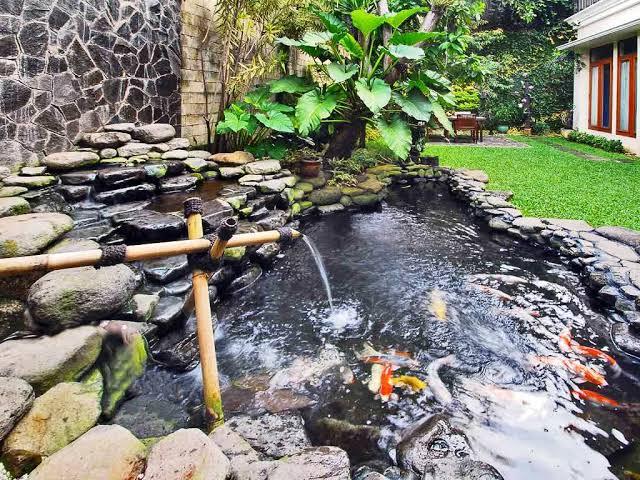 Menjaga Kandungan pH Dan Oksigen yang Terdapat Pada Air Kolam Ikan Koi