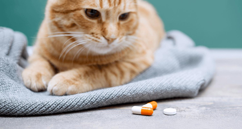 cara ampuh mengobati kucing sakit lemas