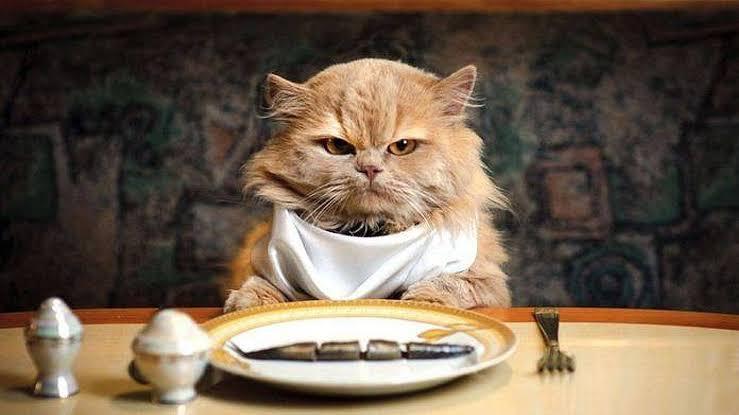 Mengganti Pakan Ke Pakan yang Lembek Untuk Pengobatan Sariawan Pada Kucing
