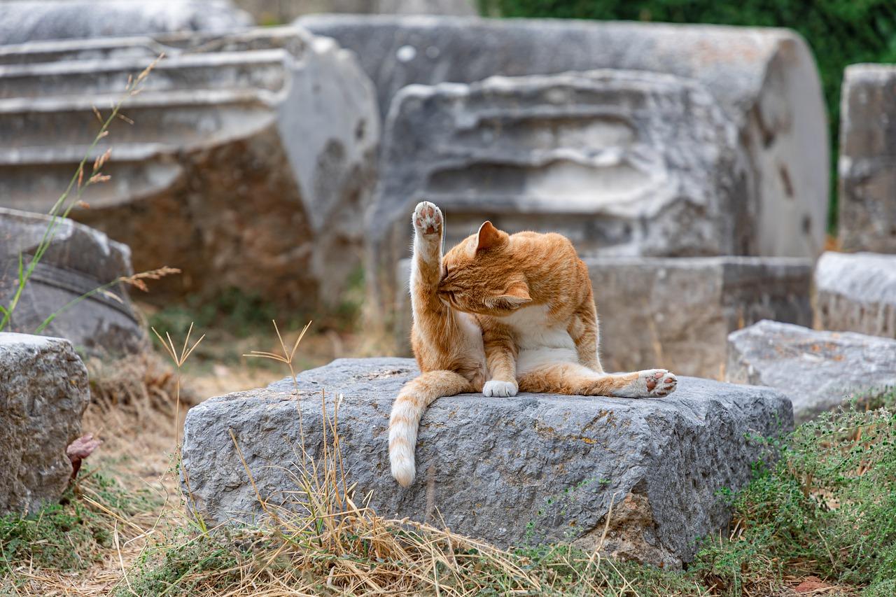penyakit kulit pada kucing