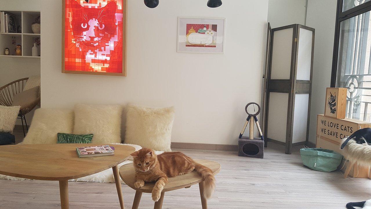 cara menggemukan kucing persia: Berikan Ruangan yang Dingin dan Sejuk
