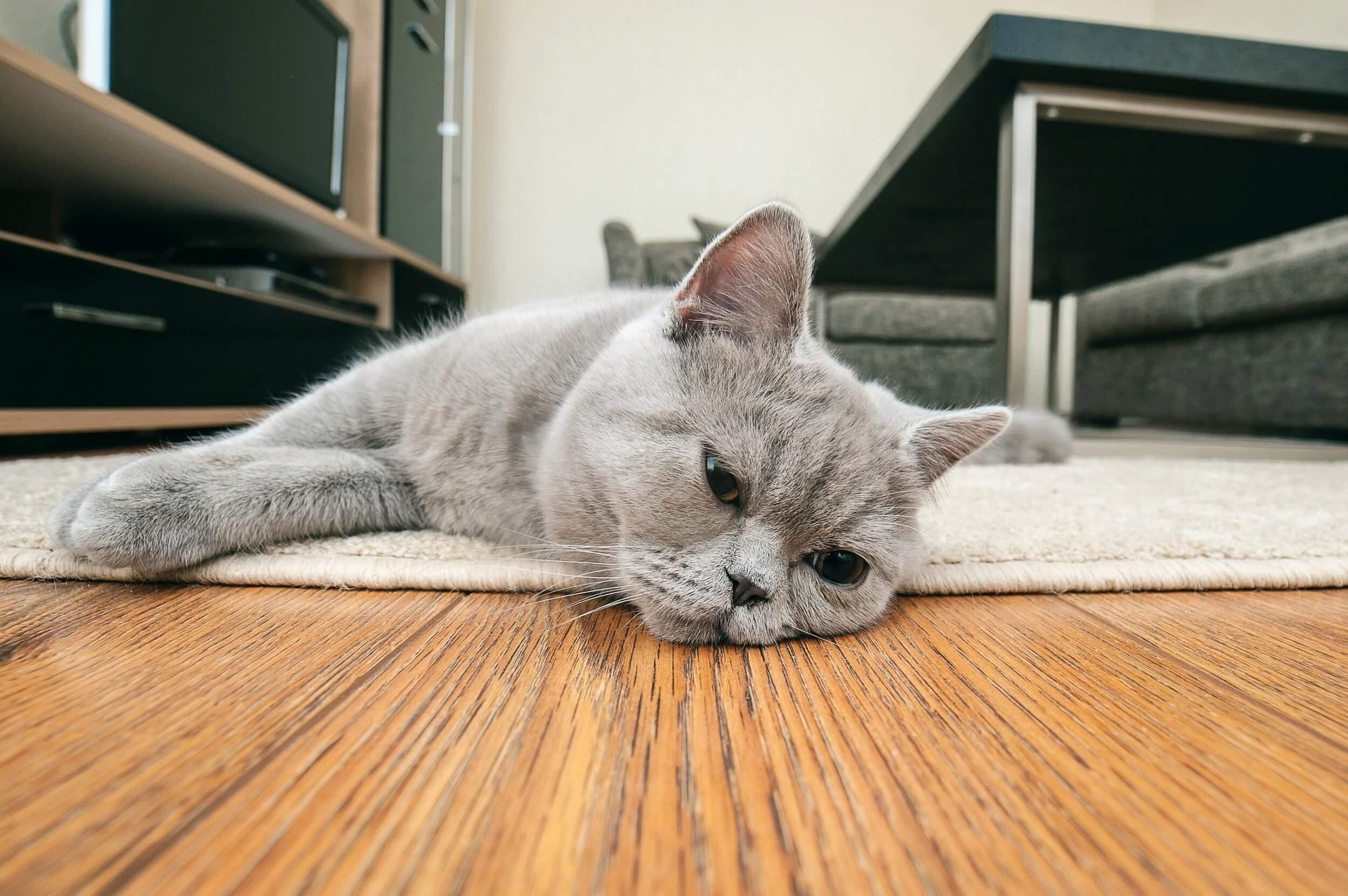 Apa Penyebab Kucing Anak Kucing Tidak Mau Makan