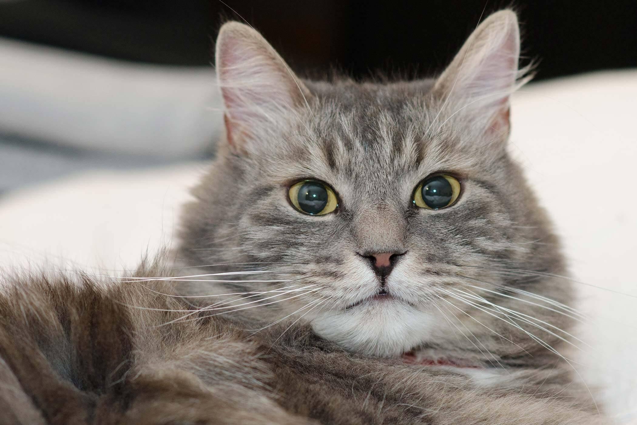 Tanda Kucing Betina Berhasil Kawin: Stres pada Kucing Mulai Mereda