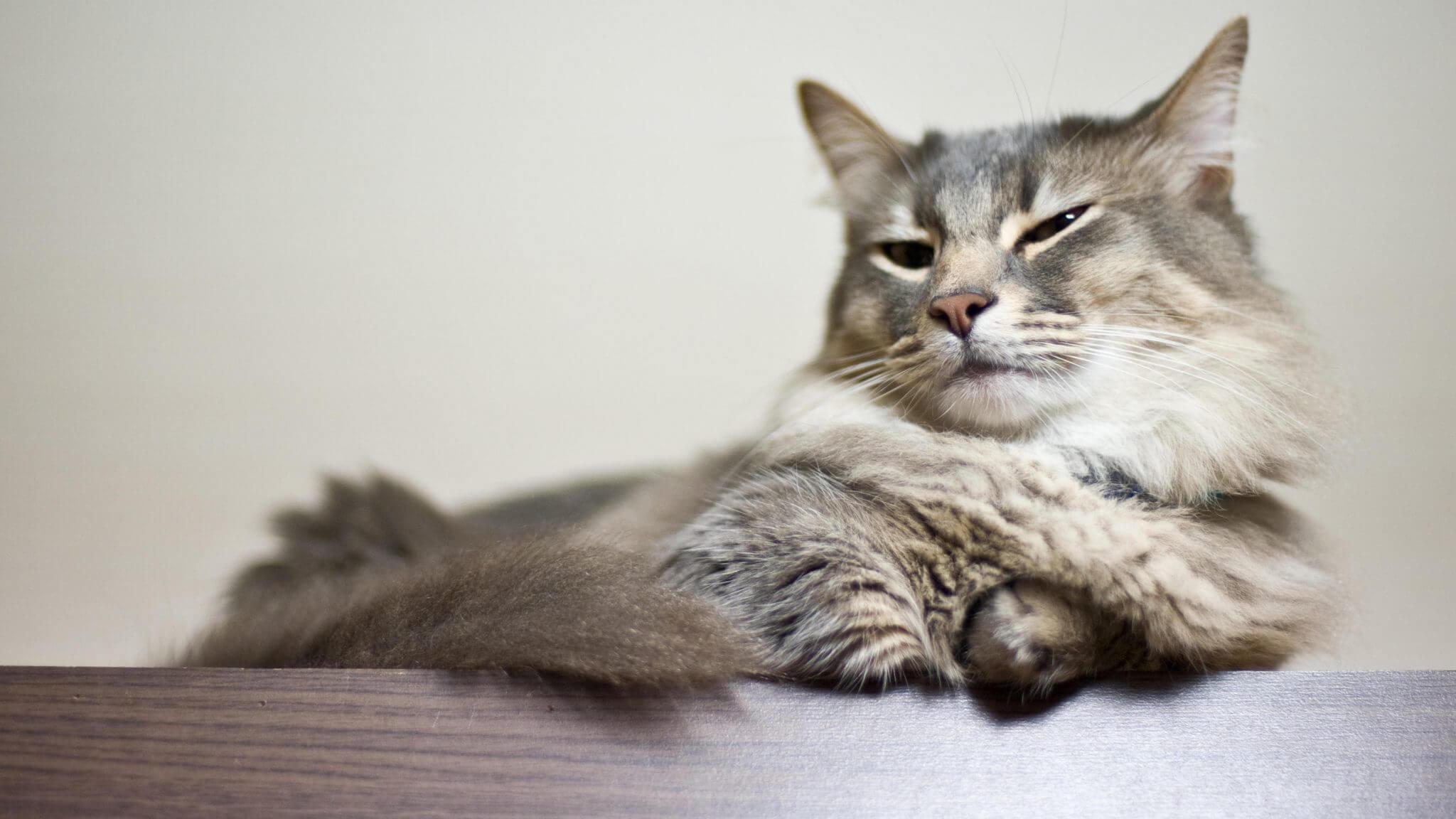 Ciri-ciri Kucing yang Berhasil Kawin: Bersarang di Tempat yang Nyaman
