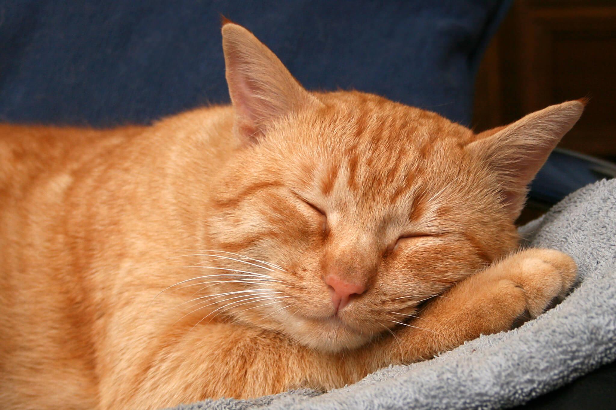 Cara Merawat Kucing Kampung Kecil: Pastikan Tempat Tidur Kucing Senantiasa Nyaman