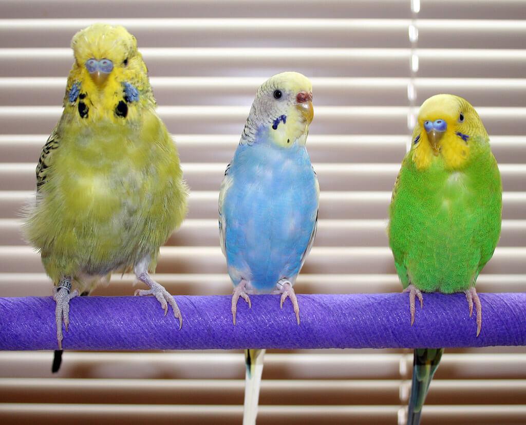 Tempatkan Kandang Burung Parkit Pada Tempat yang Mempunyai Sirkulasi Udara Yang Bagus