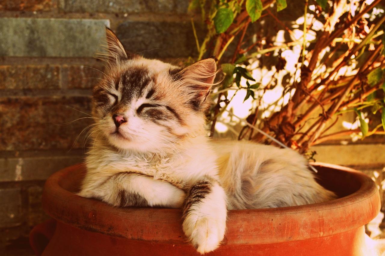 tips agar bulu kucing tidak rontok