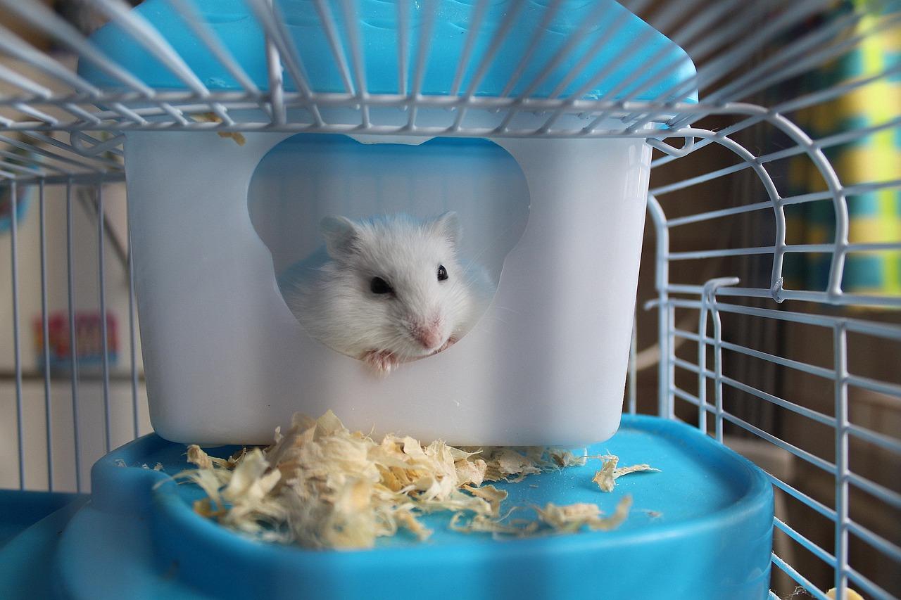 tips memelihara hamster dengan baik