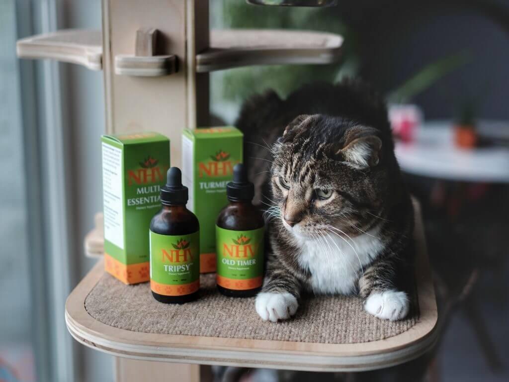 cara mengatasi kucing sakit lemas