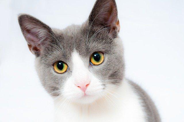vitamin kucing