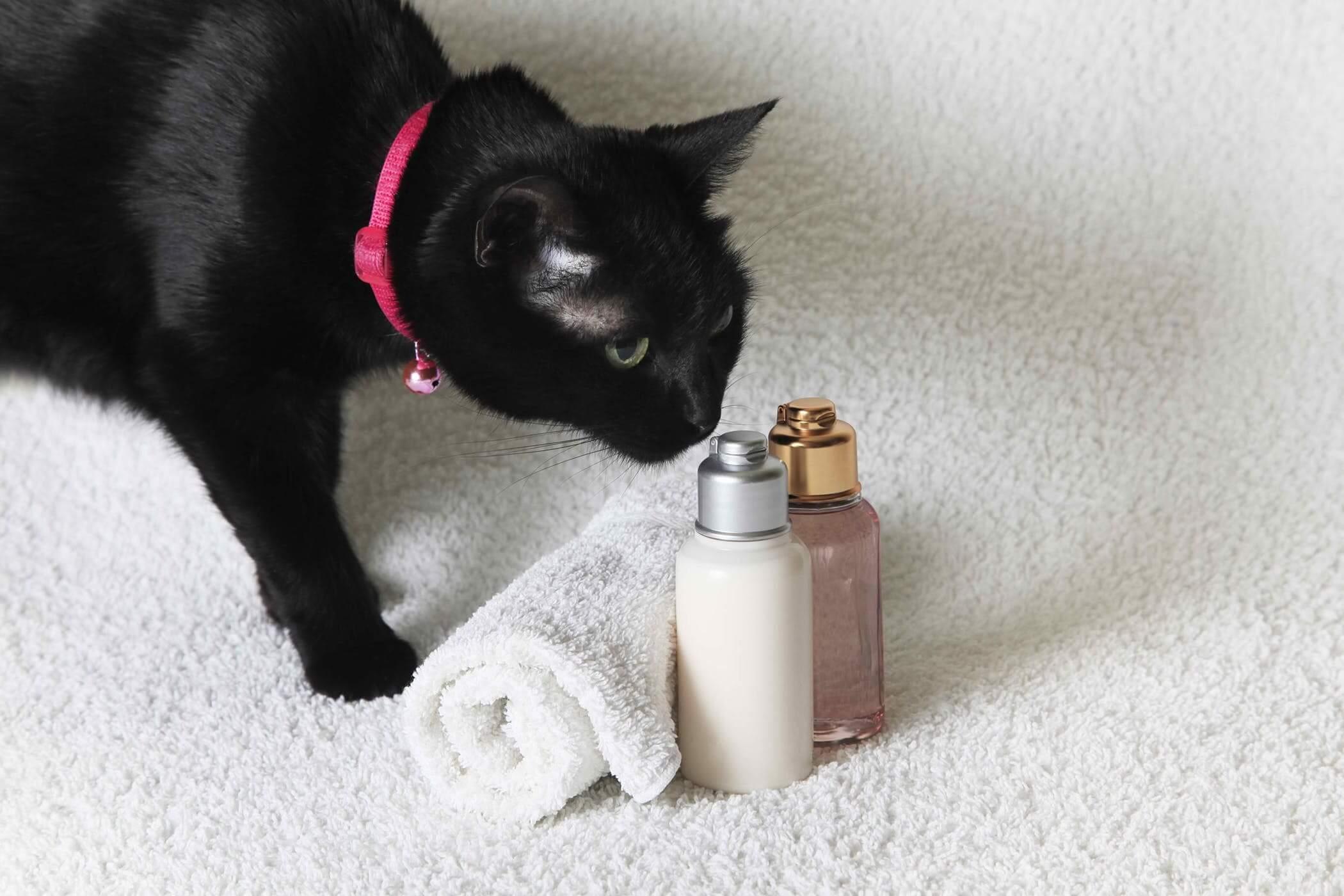 Rekomendasi Harga Shampo Kucing Terbaik