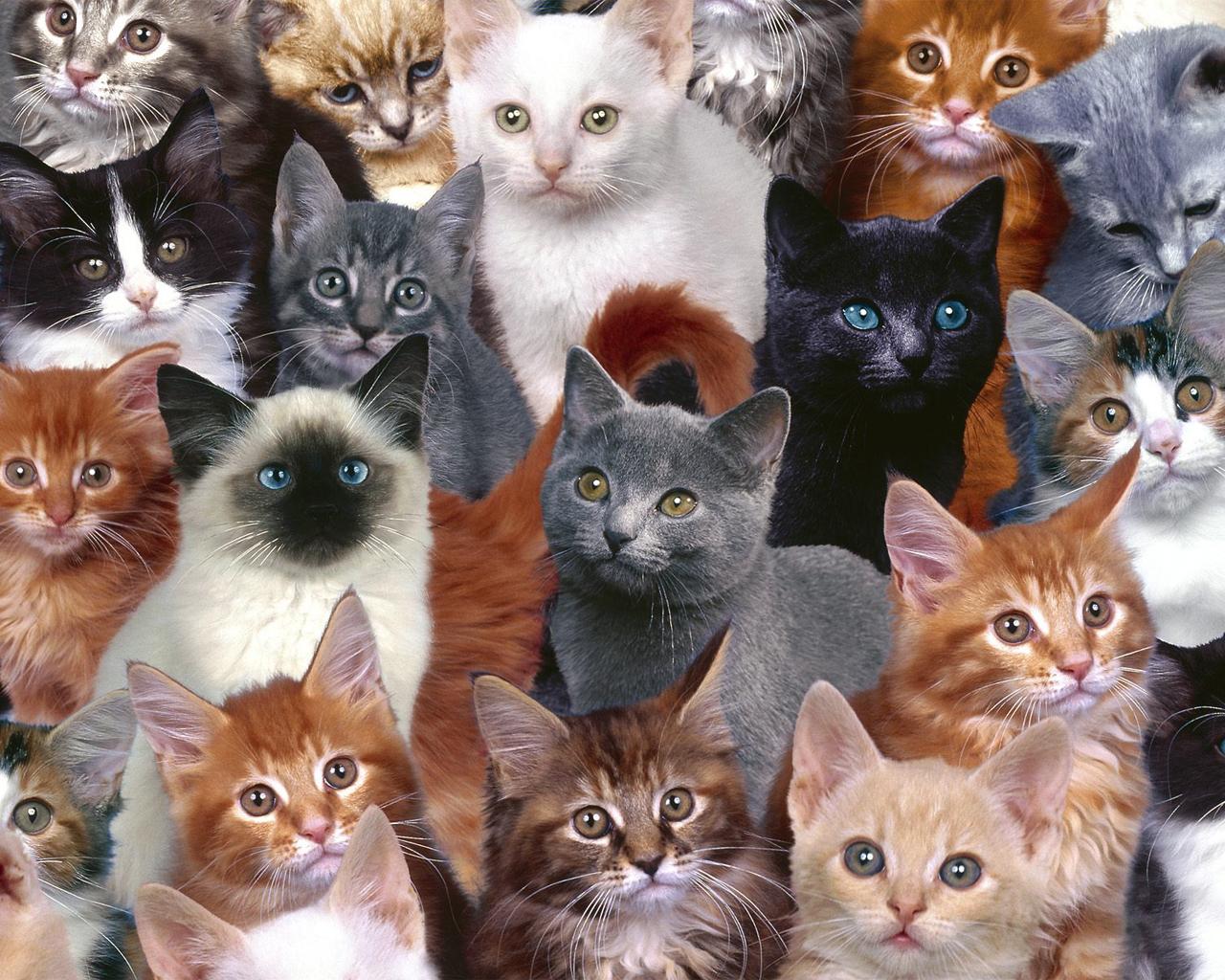 Klasifikasi Kucing Berdasarkan Jenisnya