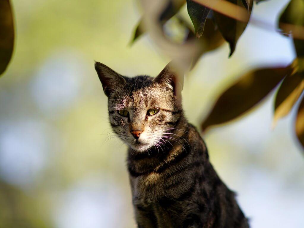 ciri scabies pada kucing yaitu perilakunya murung