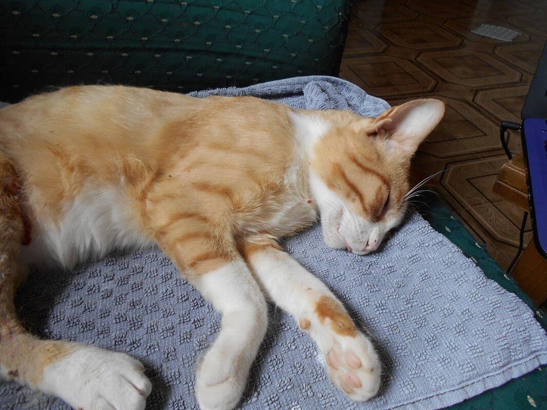 gambar kucing mati lemas