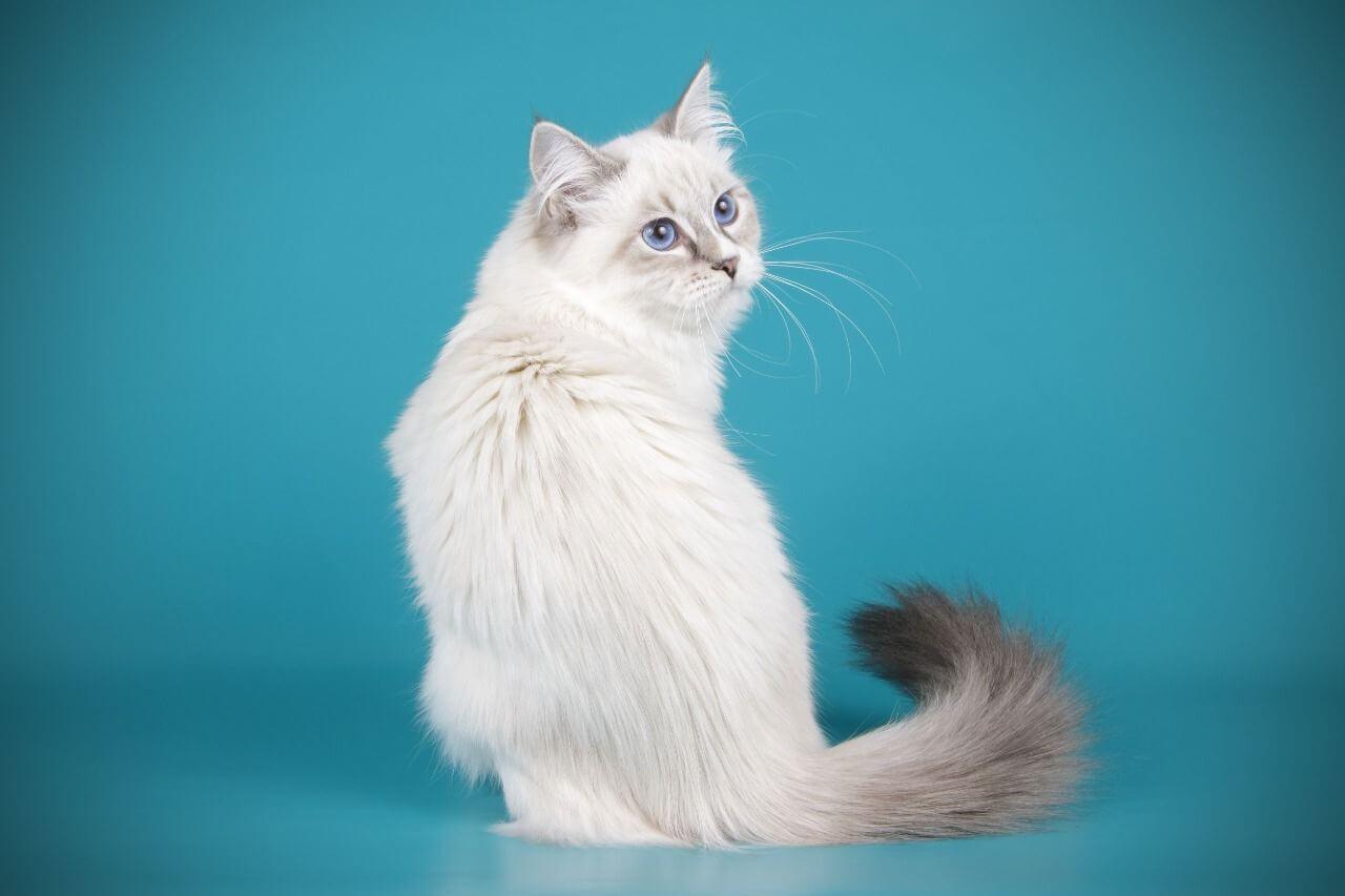 daftar vitamin kucing