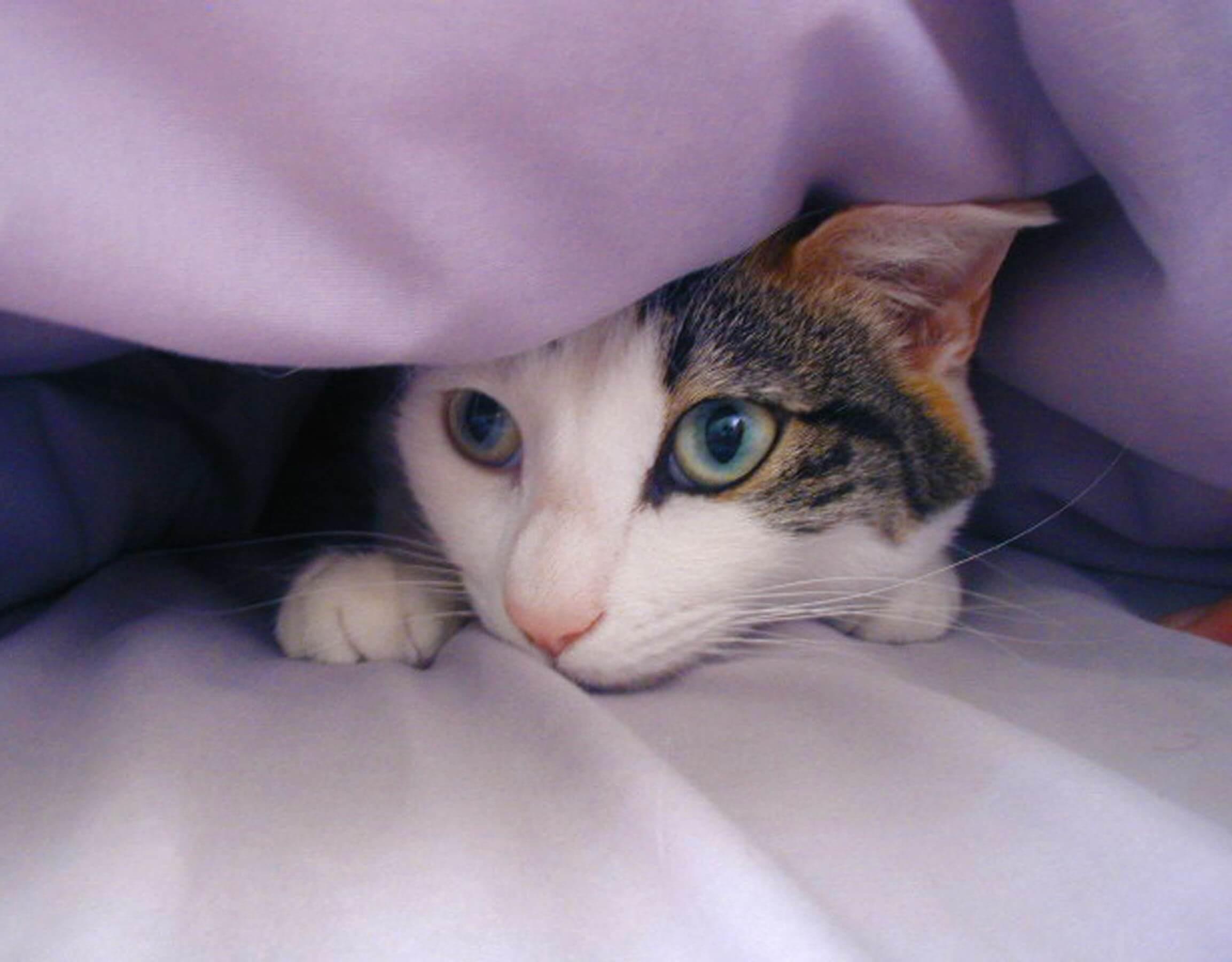 obat kucing demam tidak mau makan