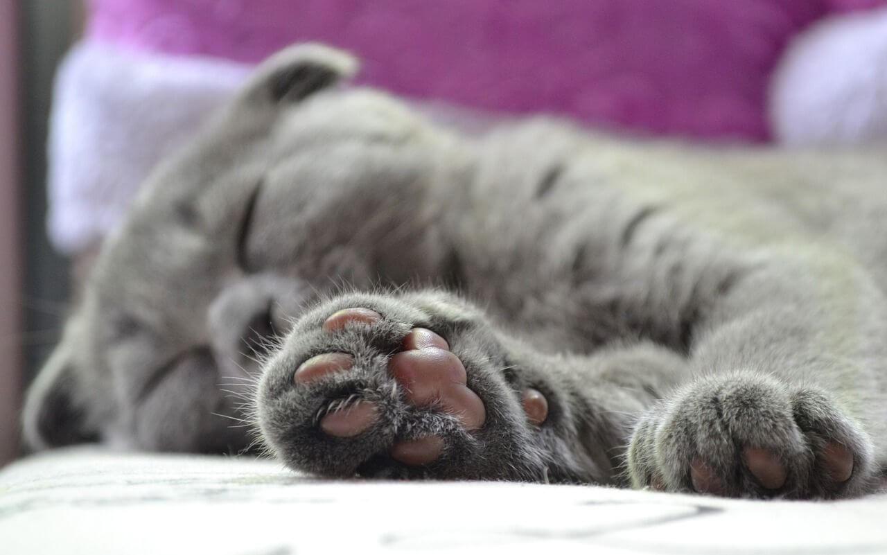 Penyakit yang Mungkin Muncul Akibat Kucing Tidak Divaksin